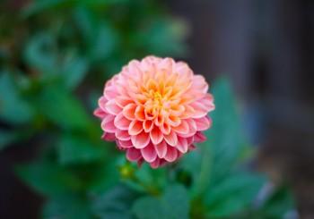 garden_0005
