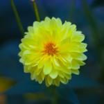 garden_0008