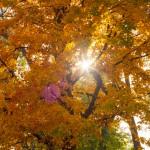 maple_leaves_0005